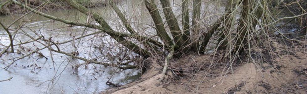 Sedimentation on the Rother ©